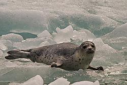 2016_Alaska-181.jpg