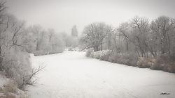 Whitemud_River_Hoarfrost.jpg