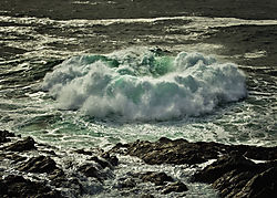 Wild_Pacific_Rose.jpg