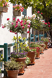 Carmel-By-The-Sea_Potted_Plants_0022.jpg