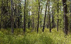 Cisco_Grove_Deciduous_Forest_and_Scrub_0230.jpg
