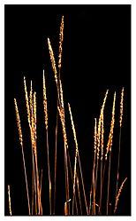 5736Sun_Grass_NET.jpg