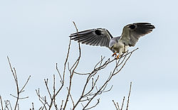 Birds_of_Prey_0007.jpg