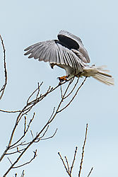 Birds_of_Prey_0011.jpg