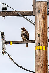 Birds_of_Prey_0037.jpg