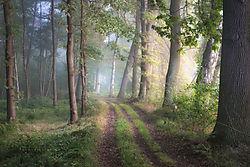 dec2019-landscape-Hans_Ztz.jpg