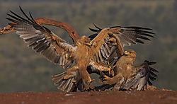 november2019-wildlife-amorkel.jpg