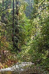 Muir_Woods_National_Park_2010-0116.jpg