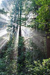 Muir_Woods_National_Park_2011-0116.jpg