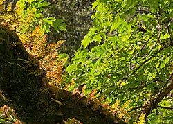 Muir_Woods_National_Park_2011-0235.jpg