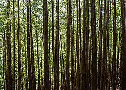 Muir_Woods_National_Park_2015-0050.jpg