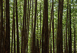 Muir_Woods_National_Park_2015-0053.jpg