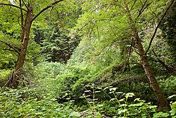 Muir_Woods_National_Park_2015-0191.jpg