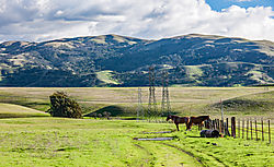 Livermore_Area_Horses_and_Towers_2016-078.jpg