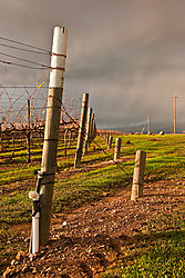 Livermore_Area_Vineyards_and_Fenceline_0285.jpg