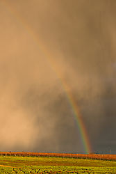 Livermore_Area_Vineyards_and_Rainbow_0294.jpg
