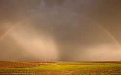 Livermore_Area_Vineyards_and_Rainbow_0307.jpg