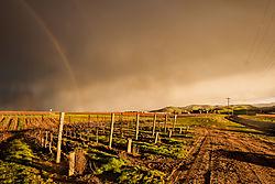 Livermore_Area_Vineyards_and_Rainbow_2016-0116.jpg