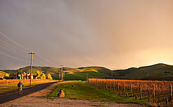 Livermore_Area_Vineyards_at_Sunset_0320.jpg