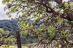 Pleasanton_Alviso_Adobe_Park_2015-0089.jpg