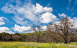 Pleasanton_Foothill_and_Stoneridge_2015-0002.jpg