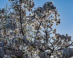Roseville_Back-Lit_Tree_2021-0062.jpg