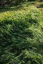Roseville_Foxtails_and_Open_Space_2021-5348.jpg