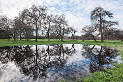 Roseville_Pond_and_Reflected_Trees_0673.jpg