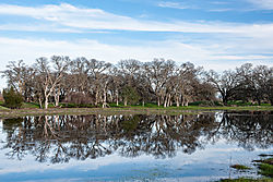 Roseville_Pond_and_Reflected_Trees_2019-0056.jpg