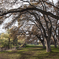 Roseville_Tree_Canopy_and_Pathway_2_0824.jpg