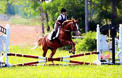 HorseImpOrg.jpg