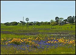WILD_FLOWERS_NEAR_PLYMOUTH_04-10-19_41519-PSF.jpg