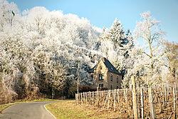 DSC390231_-Dezember-201615165689Ulrich-Wilbert-Bearbeitet.jpg