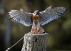 Birds001.jpg