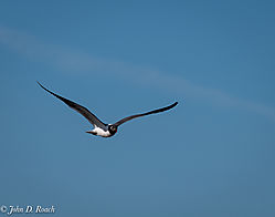 Shorebirds_at_Reed_s_Beach-1.jpg