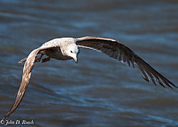 Shorebirds_at_Reed_s_Beach-4.jpg