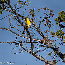 Variaty_of_Birds_at_the_Ocean_City_Rookery-2.jpg