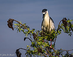 Variaty_of_Birds_at_the_Ocean_City_Rookery-9.jpg