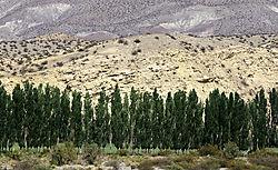20200118144045_Andes.jpg