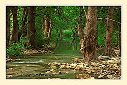 Cypress_Creek1S2M.jpg