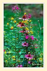 Native_Flowers1MAI_copy.jpg
