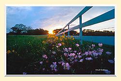Roadside_Sunset2S2MAI_copy.jpg