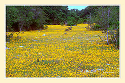 Spring_on_a_Texas_Roadside5.jpg