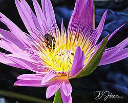 10_Photos_Bee.jpg