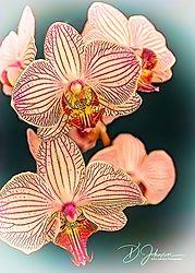 Macro_Orchid_Fower.jpg