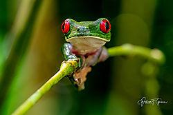 Costa_Rica-2635.jpg