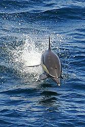 DSC_9304_Dolphin.jpg