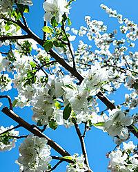 Spring21.jpg