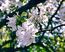 Spring31.jpg