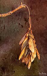 dry_leaves.jpg